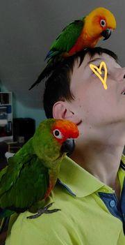 2 Papageien Sittiche Pärchen