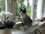 Menschenbezogene hübsche Katze