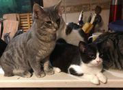 5 Katzenkinder