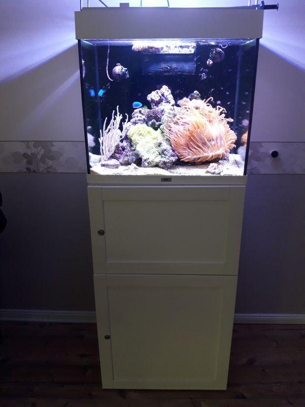 Meerwasseraquarium 120l komplett oder Inhalt