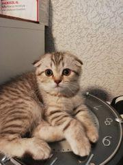 4 Bäbys wunderschöne kitten