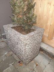 Steinkübel für Pflanzen und Bäume