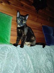 Katzen Baby Glückskatze 8 Monate