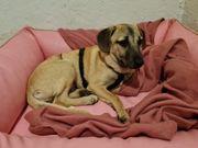 Anna 4 Monate alt Welpe