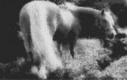 Vorlage für Ministeck Pferd1 80x60cm