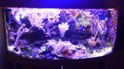 Meerwasser Aquarium mit Panoramascheibe