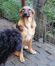 Tierschutz KATHY 2 Jahre jung