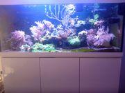 Meerwasser Aquarium Komplett 500L