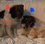 Die Unzertrennlichen Momo und Minou