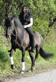 Reitunterricht Working Equitation Kurse Gelassenheitstraining