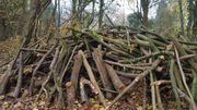 6 Ster Holz Buche Feuerholz