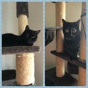 Katzen Lilli und Bailey beide