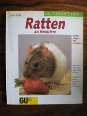 Ratten als Heimtiere