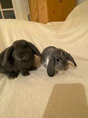 Kaninchen 6 Monate
