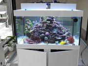 Seewasser Aquarium komplett mit moderner