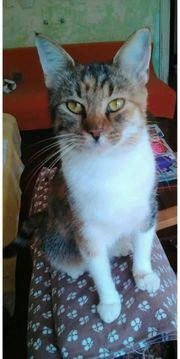 Katzenmädel Balu sucht ein liebevolles