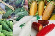 30 Samen Gurken-Mix Gemüsepflanze