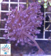 Korallen Aktion