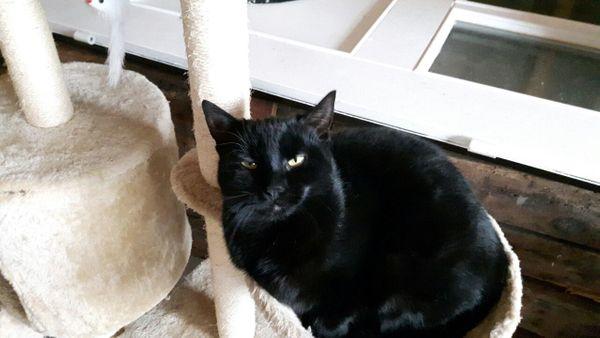 Schwarzer Kater Katze entlaufen