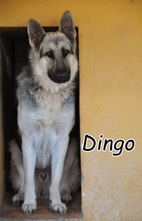 Gehen Sie gemeinsam mit Dingo durchs Leben? ? ?