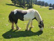 Freizeitskumpel gesucht Pony Pferd oder