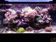 Sonderanfertigung 180L-Aquarium 80 x 50