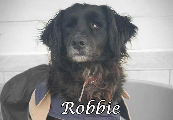 Der blinde Robbie sucht ein