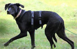 Jule geb März 2019 kastriert: Kleinanzeigen aus Rutesheim - Rubrik Hunde