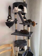 Türkische Angora Kitten suchen liebevolles