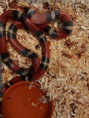 Private auffangstation für Reptilien Wirbellose