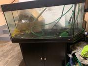 Schönes Juwel Aquarium abzugeben