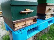 Bienenvölker auf Zandermaß