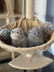 Kitten suchen neues Zuhause