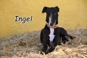 Ingel sucht nach seinen eigenen