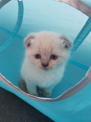 Bkh Kitty Junge