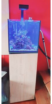 Meerwasser Aquarium komplett 125 Liter