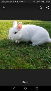 Tolles Hermelin Kaninchen Mädchen sehr