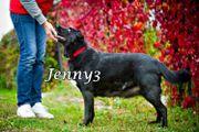 Blinder Labrador-Mischling Jenny sucht ihren