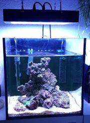 Nano Meerwasseraquarium komplett