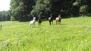 Sommerweide Kur Weide Platz Offenstall