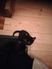 Süße Katzen-Babys Kitten