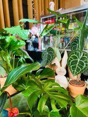 Pflanzen und Dekoration