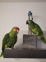 2 Amazonen Papageien mit Voliere