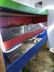 Liebevolle Betreuung für Meerschweinchen Kaninchen
