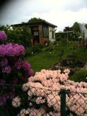 Schönen gepflegten Pachtgarten im Laatzen