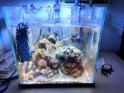 Salzwasser aquarium Cube 30x30x30