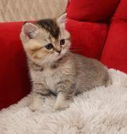 Katze ab 27 06 21