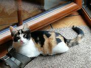 Tricolor Katze 16 Wochen