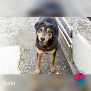 Rollo tauscht Kette gegen Körbchen