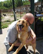 Bendegus Labrador-Schäferhund-Mix Rüde geb ca